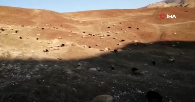 Çoban, mera tepkisini çektiği videoyla dile getirdi