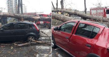 Darülaceze Otoparkı'nda çınar ağacı 4 aracın üzerine devrildi