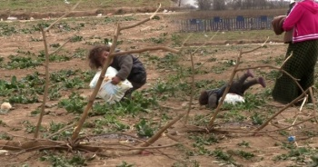 Suriyeli minik göçmenin ağır yükü