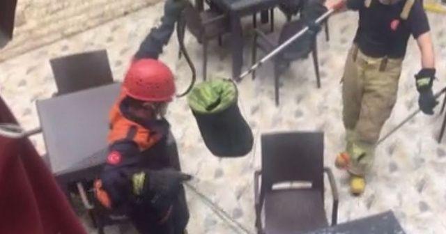 Ataşehir ve Sancaktepe'de görülen yılanlar paniğe neden oldu
