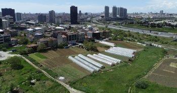 İstanbul'un merkezindeki seralarda tarım başladı