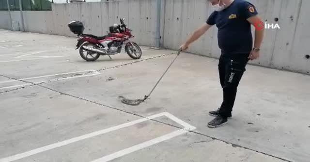 Halk otobüsüne giren 2 metrelik yılan itfaiye ekiplerini seferber etti