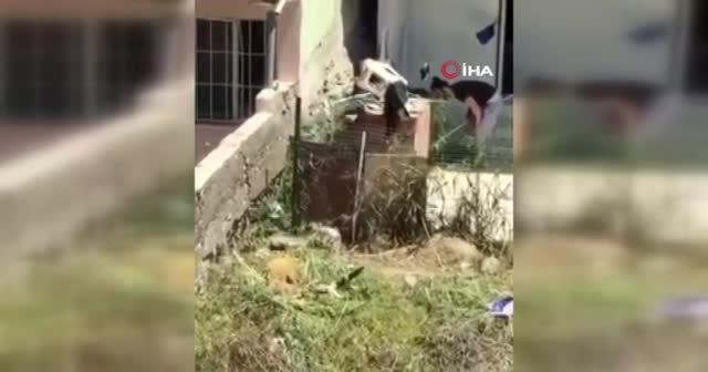 İzmir'de köpeğe şiddet!