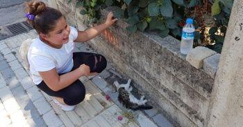 Yaralı kediyi görünce gözyaşlarını tutamadı