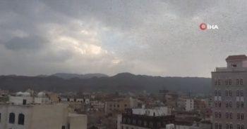 Yemen'de çekirge istilası