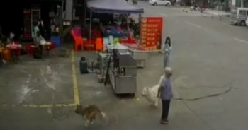 Köpek tasmasına takılıp düşen yaşlı kadın öldü