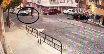 Sokak köpeklerinden kaçarken canından oldu