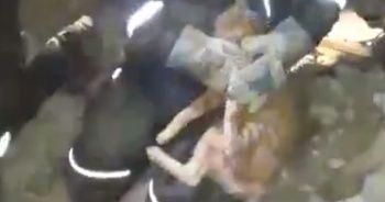 Arama-kurtarma ekipleri kediyi kurtardı