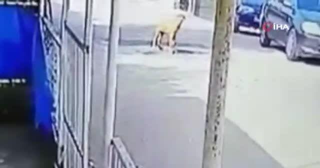 Göz göre göre aracı ile köpeğin üzerinden geçti