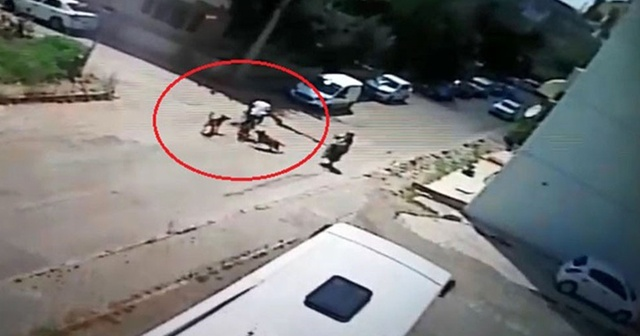 Bisiklet sürerken köpekler saldırı, otomobille çarpıştı