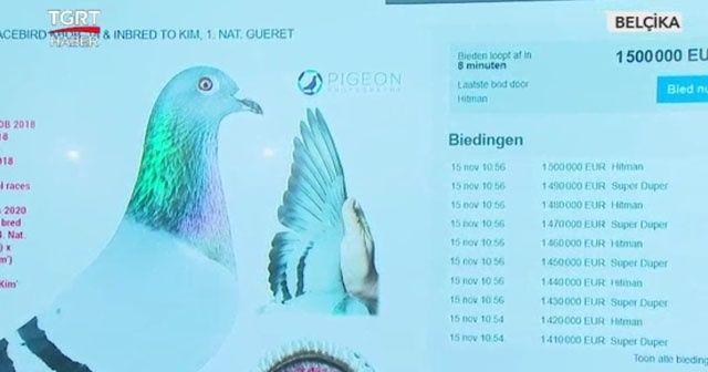 Güvercin 1 milyon 600 bin euroya satıldı