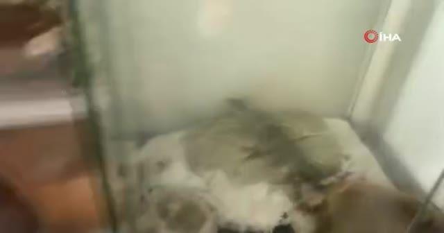 İstanbul'da 12 sürüngen hayvan ele geçirildi