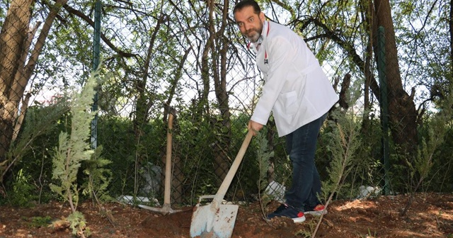Kahramanmaraş'ta göbek bağları hastane bahçesine gömüldü