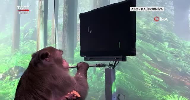 """Maymun Pager """"Beyin gücüyle"""" oyun oynadı"""