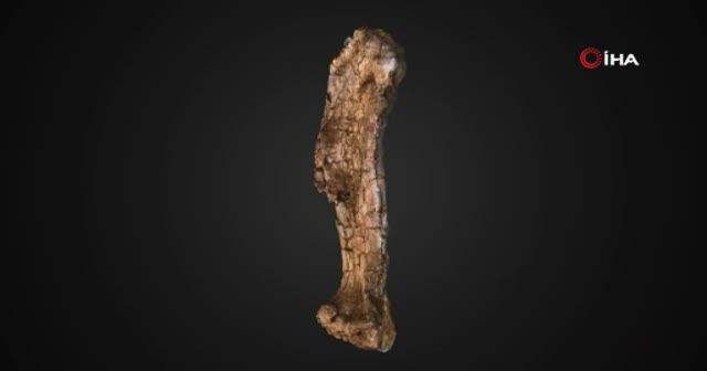 Parça parça keşfedildi! Kıtanın en büyük dinozoru