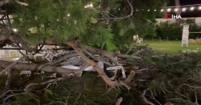 Antalya'da kır düğününde ağaç devrildi: 1 ölü, 9 yaralı
