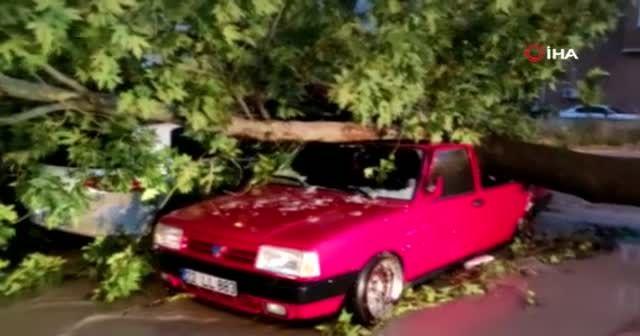 Edirne'de fırtına ağaçları araçların üzerine devirdi