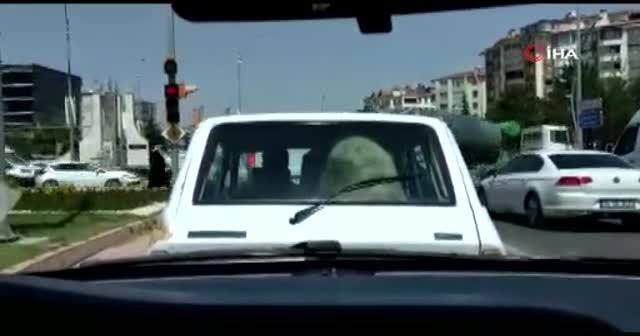 Kurbanlık koyunu otomobilin bagajında taşıdı