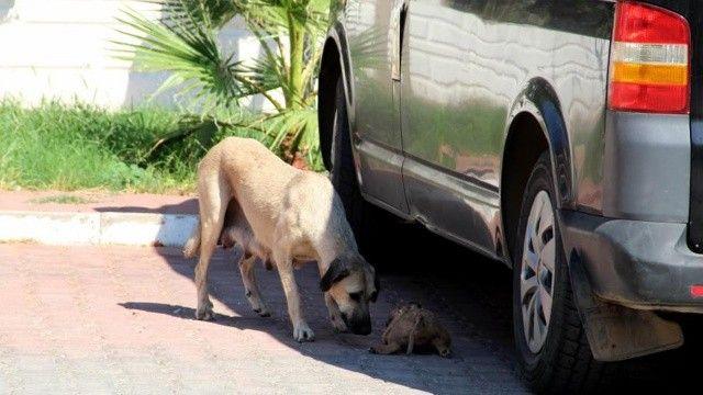5 yavru köpeği döverek ve yakarak öldürmüşler