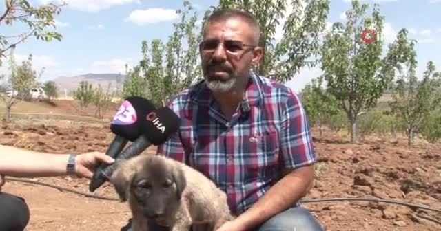 İnsanlık ölmemiş dedirten davranış: Patileri ezilen köpeği yürüteç ile ayağa kaldırdı