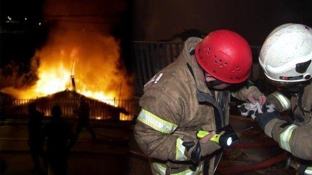 İtfaiye ekipleri yavru kediyi yangından kurtardı