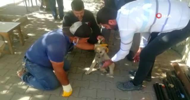 Otomobilin çarptığı yavru köpek kalp masajıyla hayata döndü