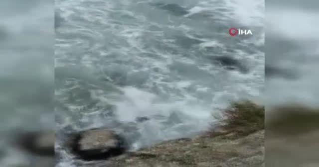 Denizde can pazarı kamerada