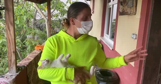 Evine giden kadın kedisini balkona iple asılı halde buldu